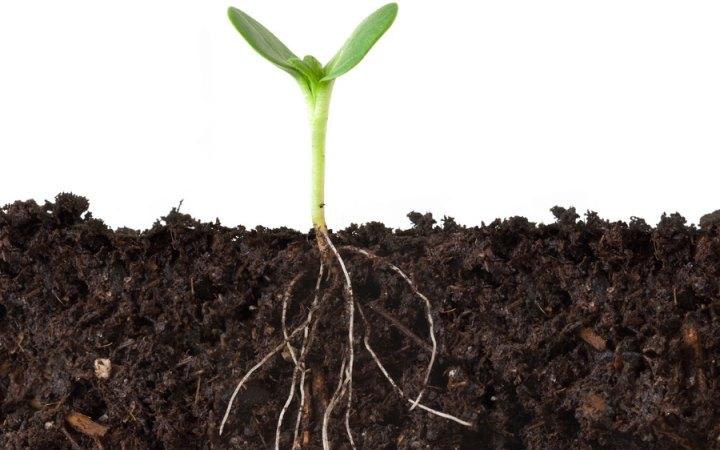 Miten sitkeimmän rikkaruohon juuret tuhotaan? Menneisyyden kohtaaminen ja anteeksianto ovat vapauden ytimessä.